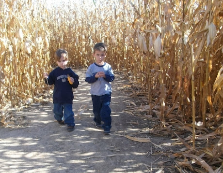 NAMC Montessori going out activity visiting a farm for fall boys in corn field