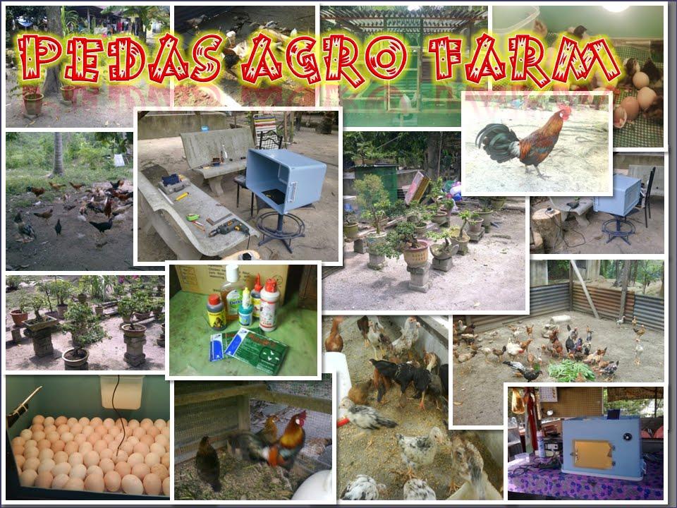 PEDAS AGRO FARM