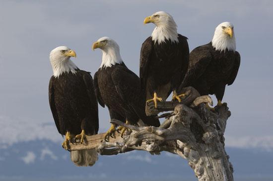 eagles - photo #20