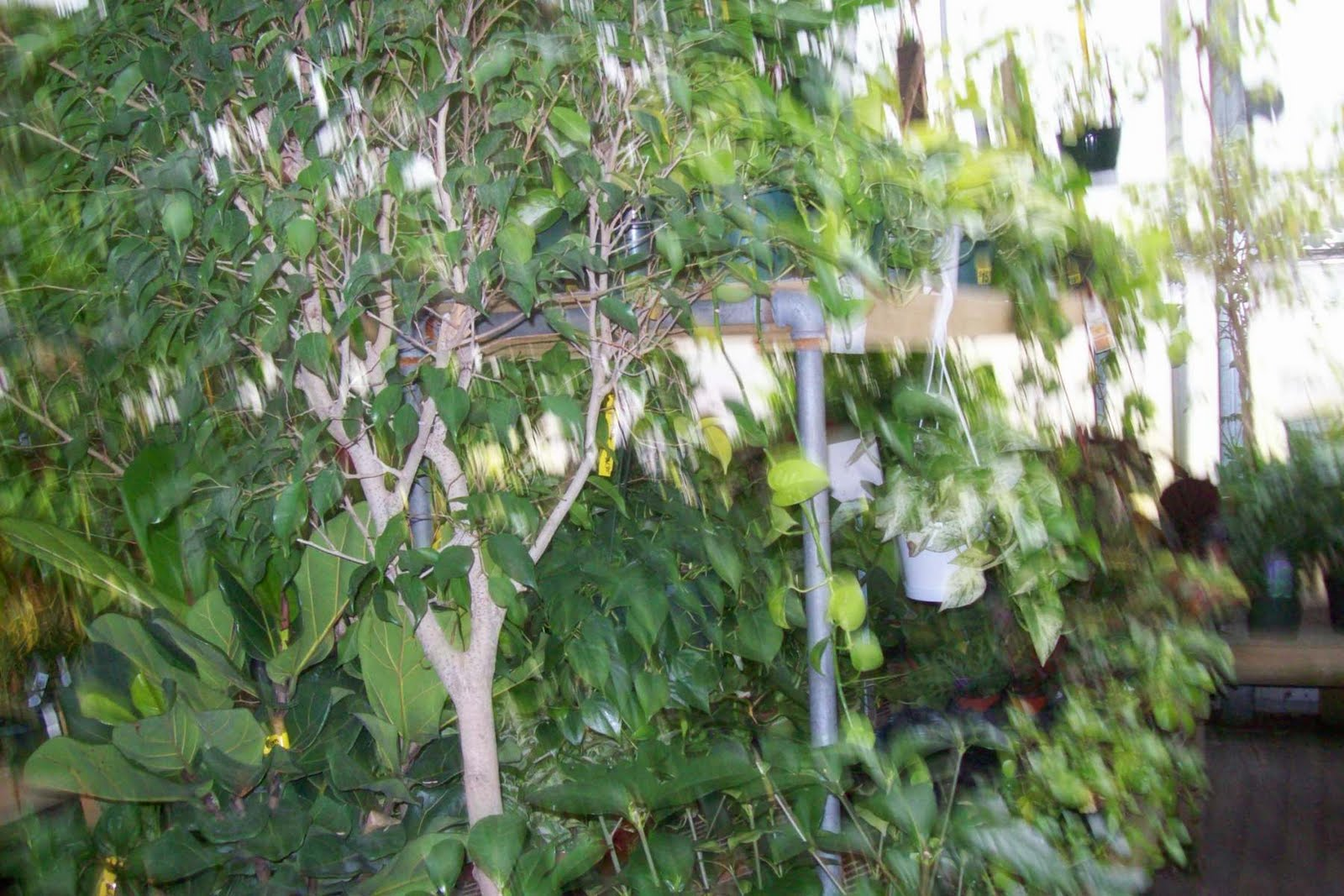 Life in a Deer Yard: HOUSE PLANTS (LIGHT&TEMPERATURE&HUMIDITY) #7D8546