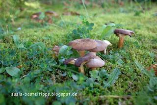 susis basteltipps mit stampin up: Pilze im Garten