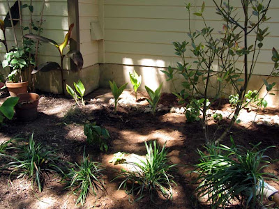 Divasofthedirt,bay laurel bed after