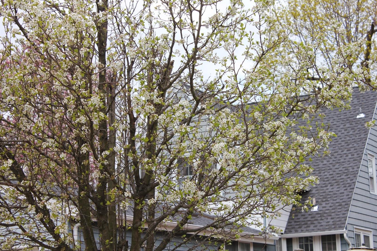 Gardening And Gardens Spring Flowering Trees