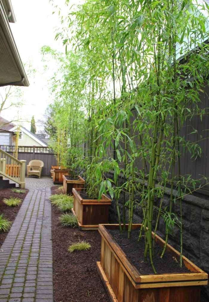 interesting bamboo garden design garden design 7