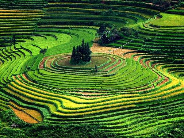Terrace paddy fields, VIETNAM