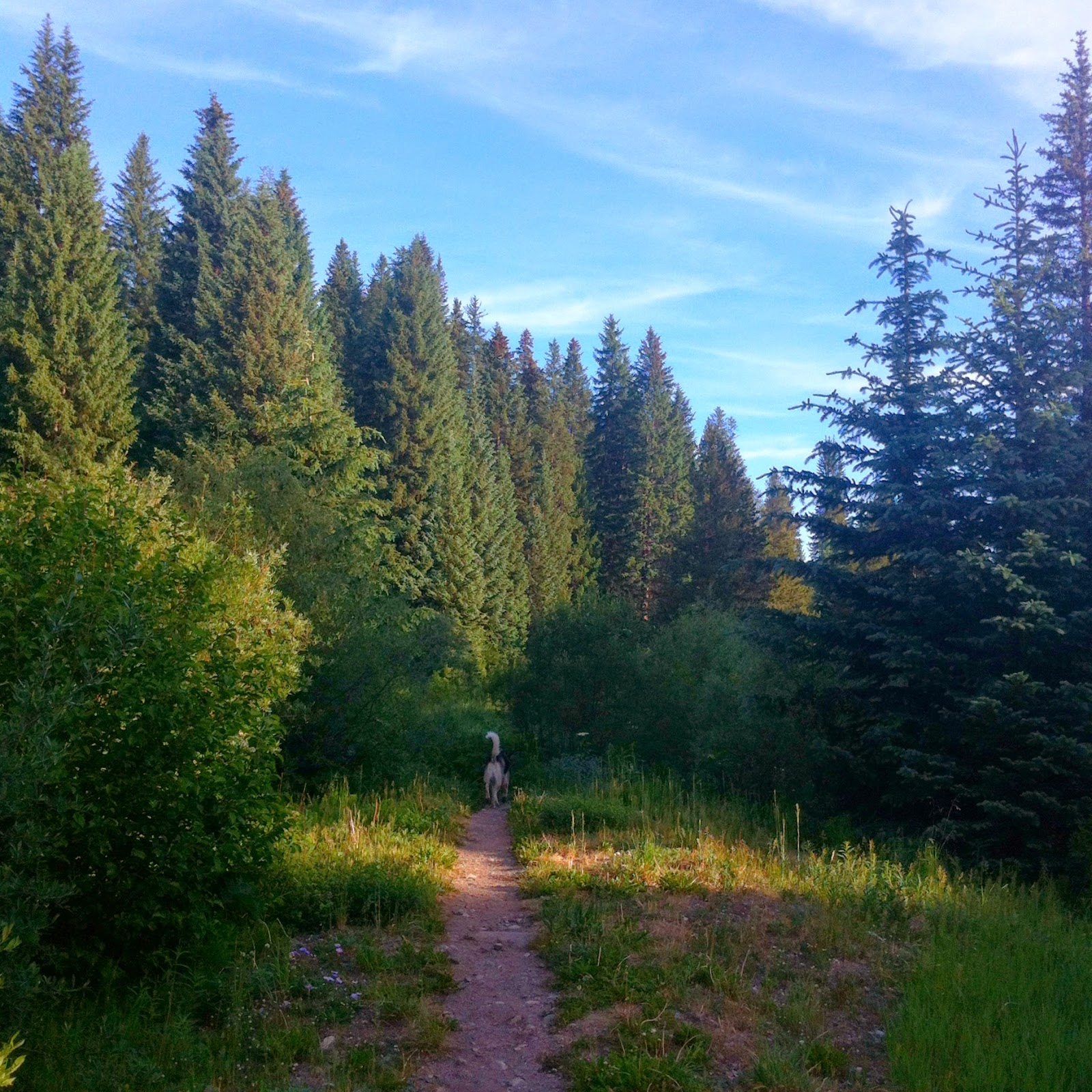 Early morning hike with Jedi in Breckenridge