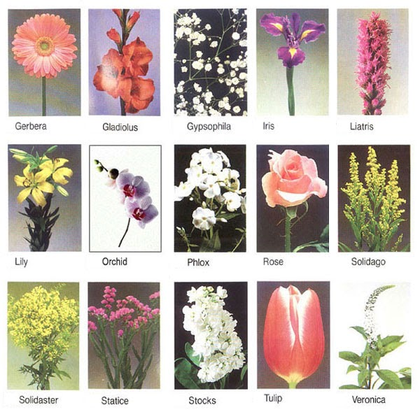 Flower names structure flower mightylinksfo
