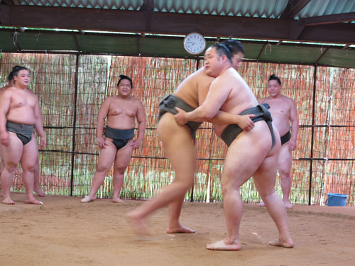 Sumo wrestlers practice