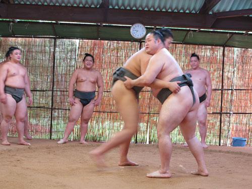 Sumo wrestlers practice