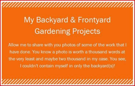 My Backyard & Frontyard Gardening Projects