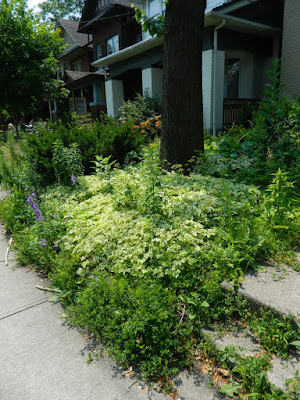 Leslieville front garden clean up before Paul Jung Gardening Services Toronto