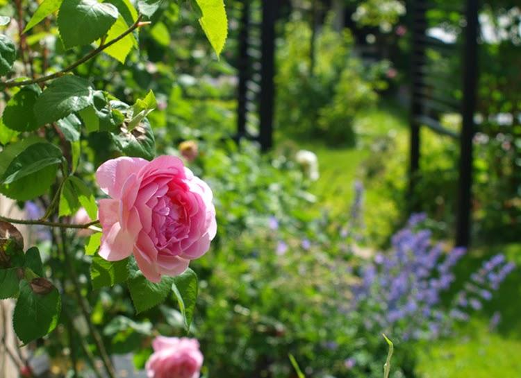 Haverum med sorte konstruktioner og romantiske roser.