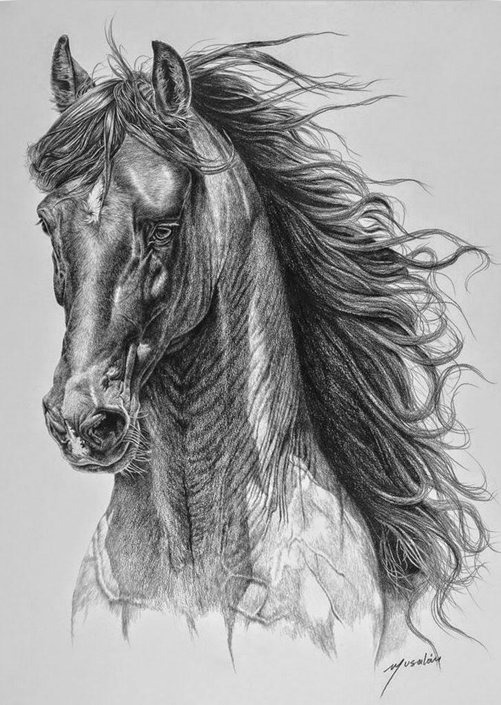 dibujos-de-caballos-imagenes