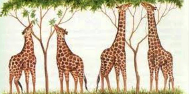 Teoria evolutiva de Lamarck y biologia