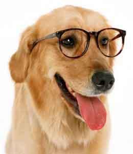 Download Como Cuidar de um Cão Tutorial