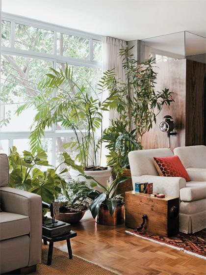T decorando por jana cassis plantas em casa - Plantas grandes para interiores ...