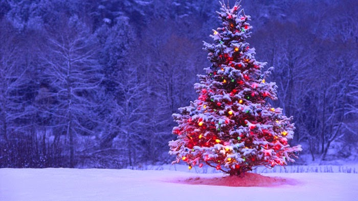 Christmas-tree-image-hover-effect-css-html