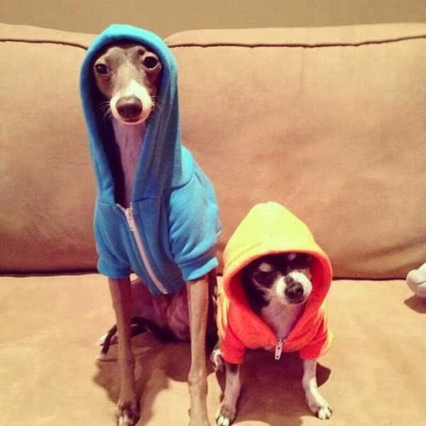 Cute dogs - part 3 (50 pics), dogs wear hoodies