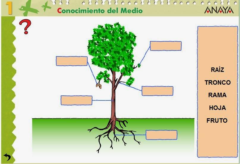 http://centros.edu.xunta.es/ceipcampolongo/intraweb/Recunchos/1/Recursos_Anaya/datos/03_cmedio/03_Recursos/actividades/3LasPlantas/act1.htm