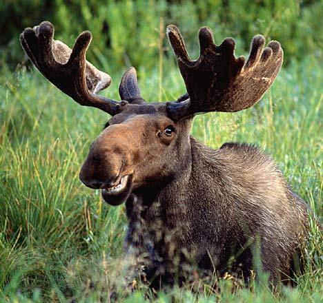 Linda Grimes: Visiting Reality : The Monday Moose