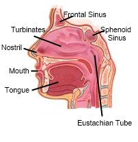 Treatments For Sinusitis - An Alternative Approach