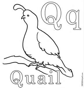 QUAIL COLORING PAGE  Quail Family Coloring Page