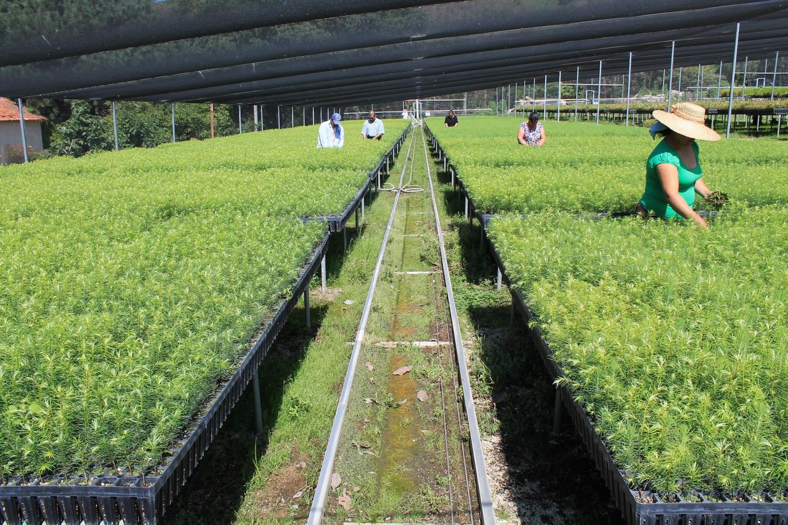 Desarrollo sustentable lista la producci n de planta en for Proyecto productivo de vivero forestal