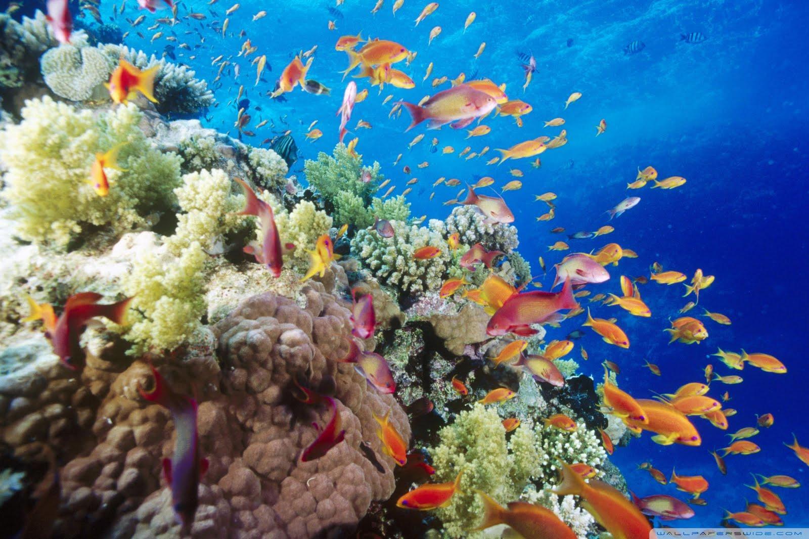 dionne beard coral reef