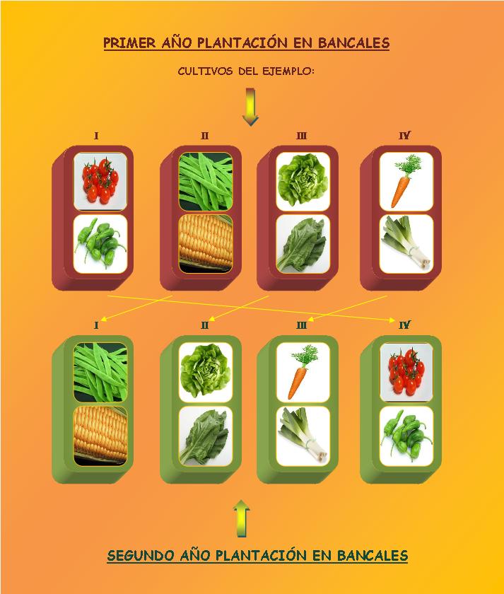 Huerto y maceto huerto ecol gico guia y planificaci n de for Que son cultivos asociados