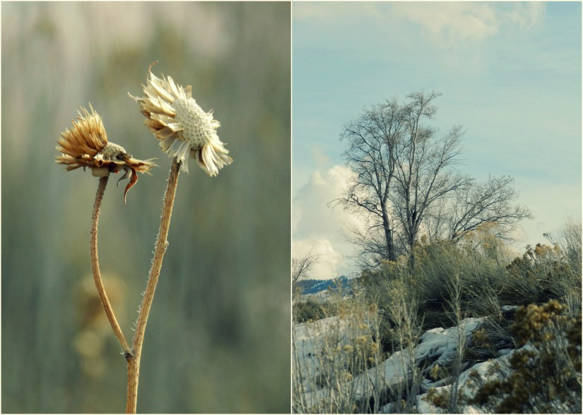 Grow Creative: yellow weeds photography