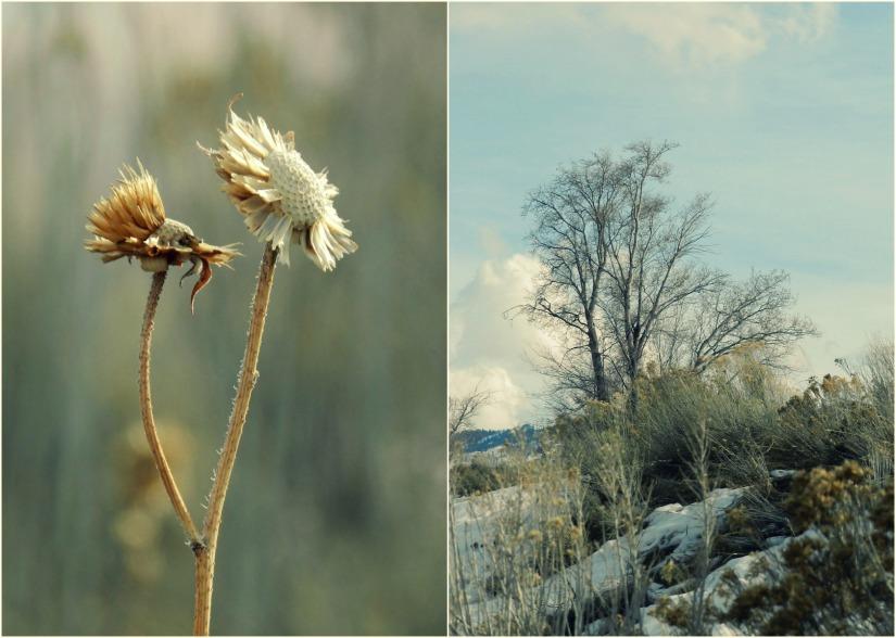 Grow Creative: yellow weeds photography