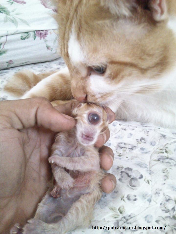 Gambar Anak Kucing Bermata Satu Di Sabah 27 August 2012