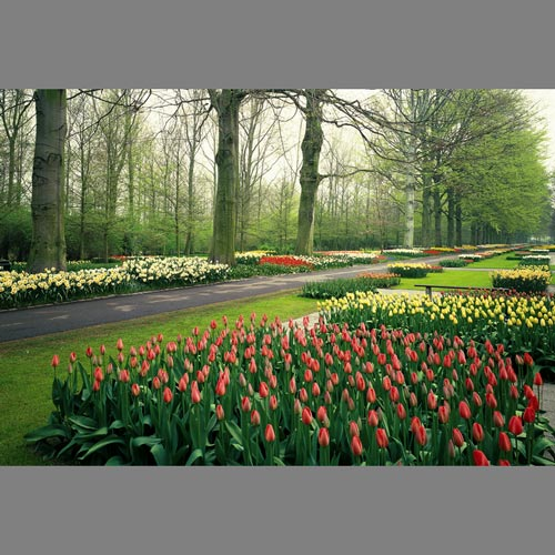 Can I Plant Summer Flowers in My Tulip Garden? | eHow.com