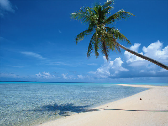 Palmeras Beach Palm Tree