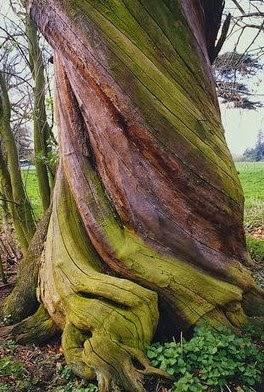 Jaringan permanen banyak terdapat pada tubuh tumbuhan yang tua