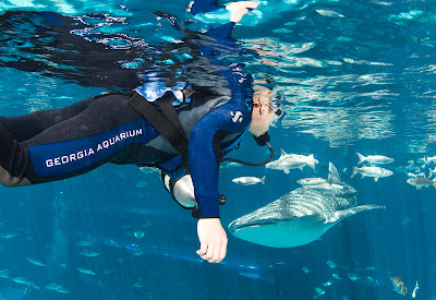 Georgia Aquarium Seen On www.coolpicturegallery.us