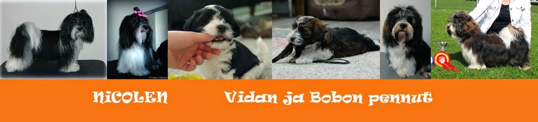 Nicolen - Vidan ja Bobon pennut