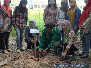 tanam pohon hari lingkungan hidup