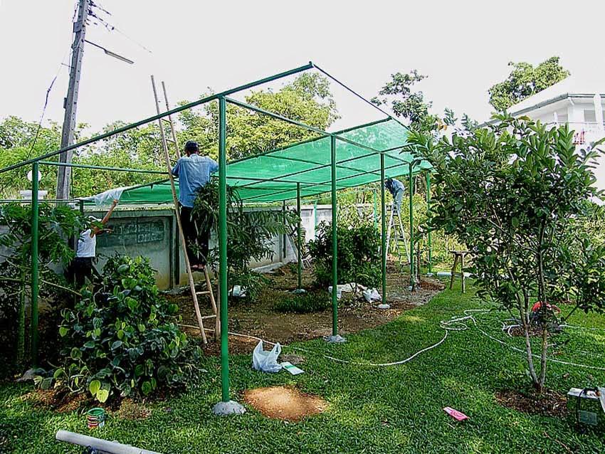 thailand pakchong beobachtungen und erfahrungen thailand sonne. Black Bedroom Furniture Sets. Home Design Ideas