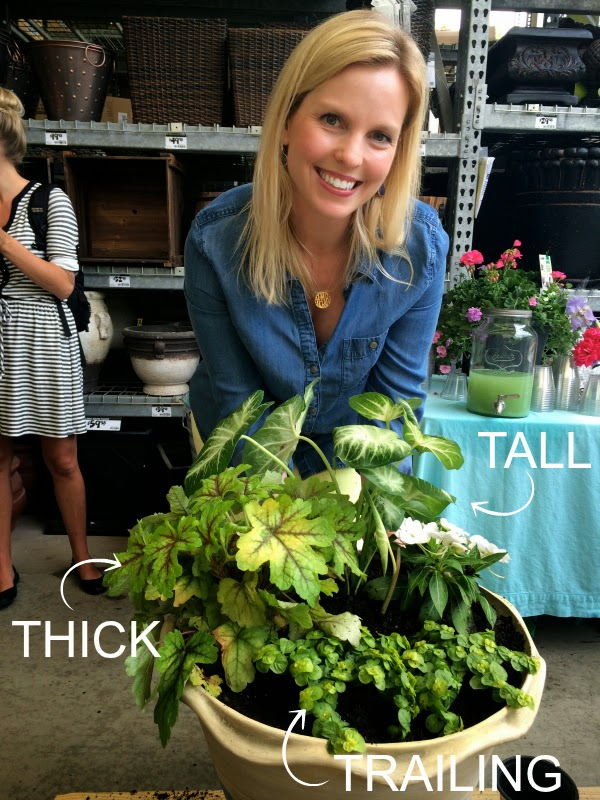 amy mikkelsen southern living plant collection