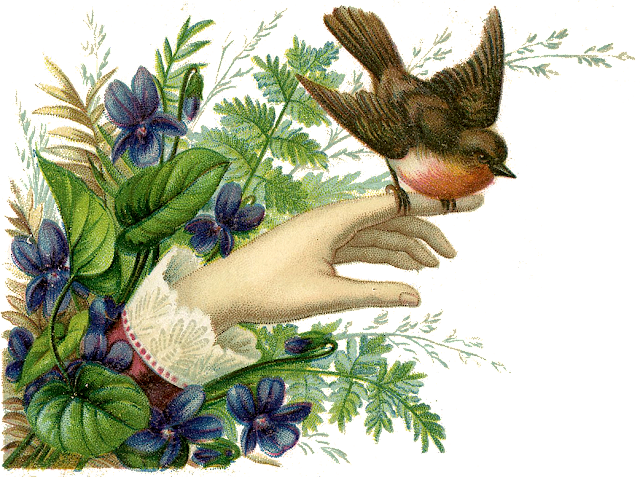 http://1.bp.blogspot.com/-QcLQMNciiWA/VCEwM0pMraI/AAAAAAAAgvk/N-Hqm4b5ilU/s1600/Bird-Hand-Victorian-GraphicsFairy.png