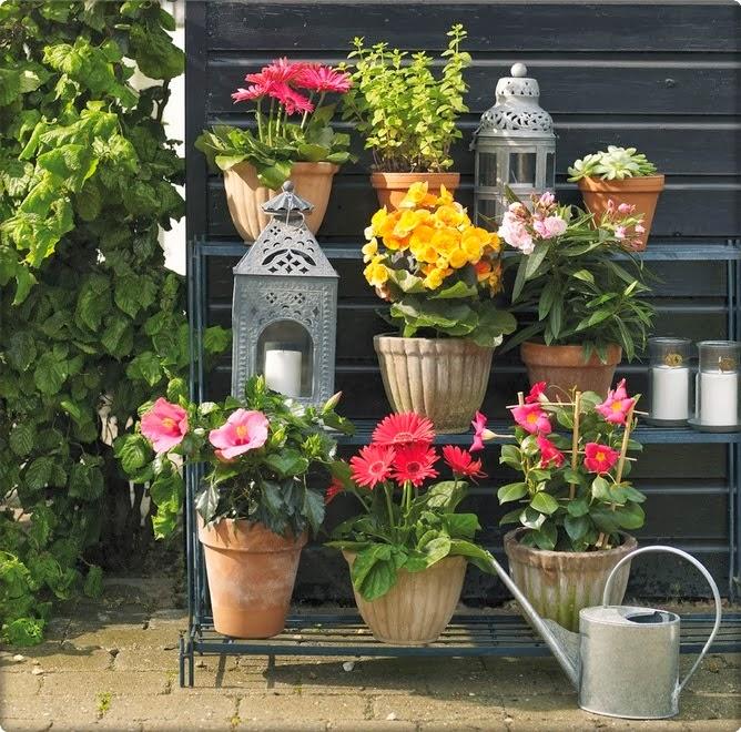 Prskanje sobnih biljaka - Moj Vrt Cvijeća
