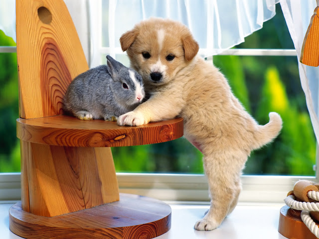 Cute Rabbit & Cute Pet Dog 24