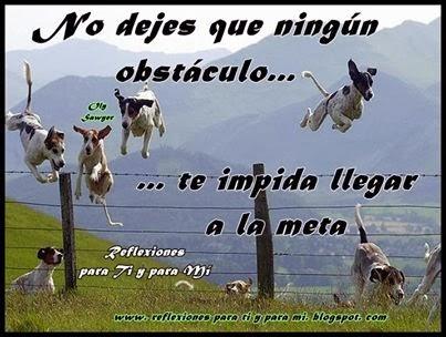 Nunca vayas a dejar que los obstáculos sean un impedimento