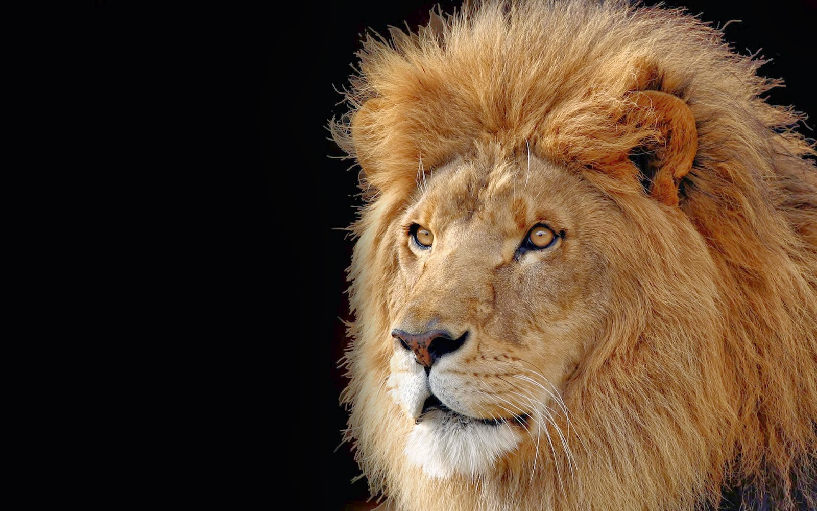 El rey de la selva 161 hasta el 218 ltimo suspiro quot el blog de ro quot