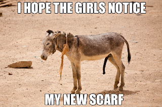 funny donkey with a big dick, i hope the girls notice my new scarf