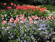 Ananda Tulip Garden, 2009