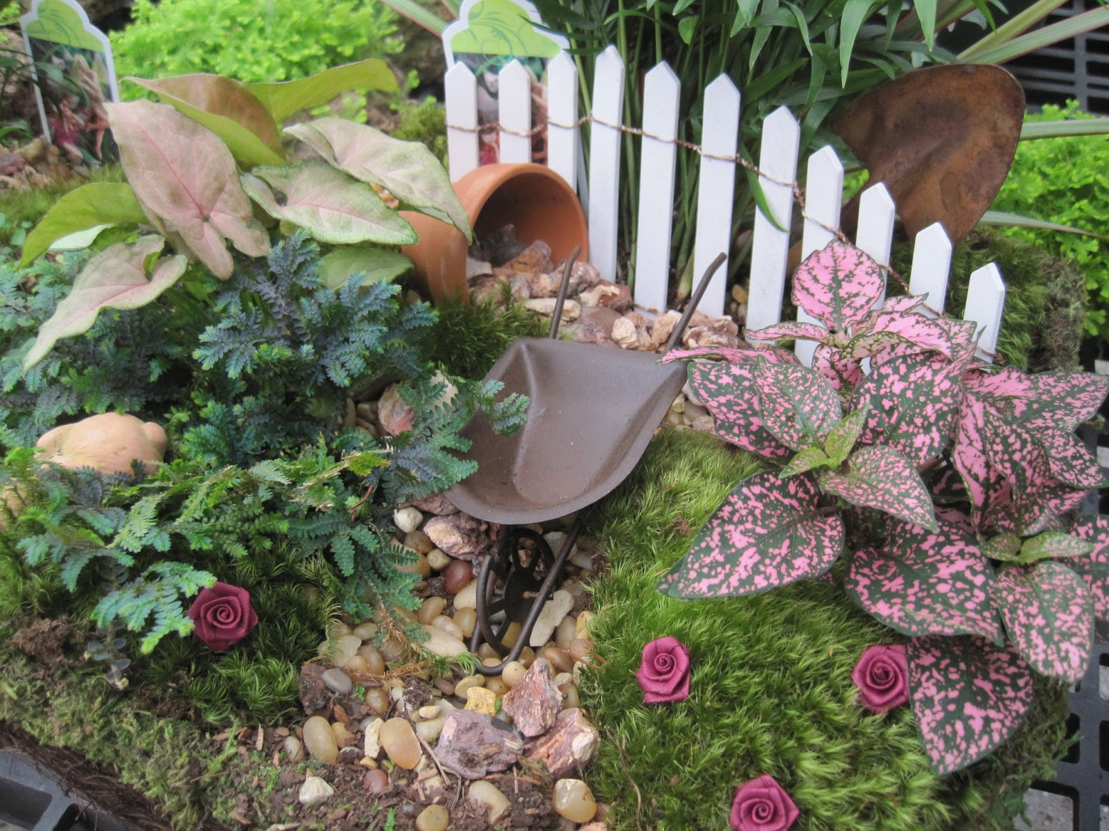 Nice Use Of Plants Fairy Gardens Pinterest