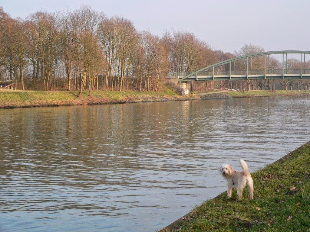 Mina Hund Hunderunde Spaziergang Ruhrgebiet Wasser Sonne Frühling