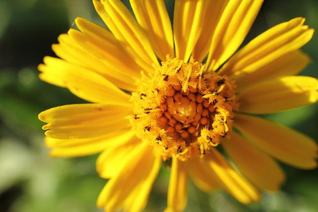 6 espécies de plantas ideais para um telhado ecológico